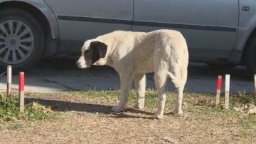 Има ли решение за бездомните кучета във Варна