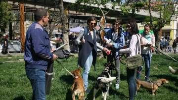 """138 кучета от приютите на """"Екоравновесие"""" са осиновени през януари и февруари"""
