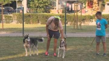 Строги правила за разходка на кучета в столичните паркове
