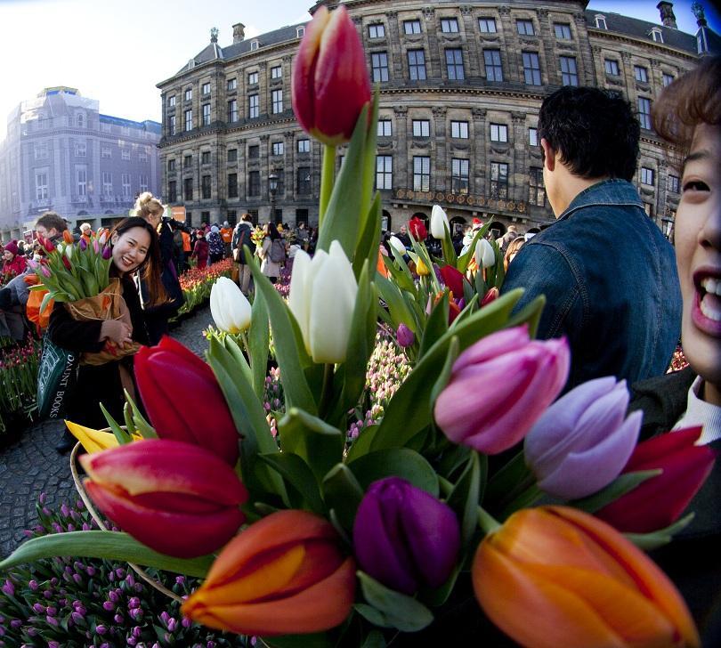 Сезонът на лалетата беше открит в Холандия. На централния площад