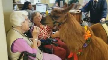 Лами се грижат за възрастни хора в САЩ