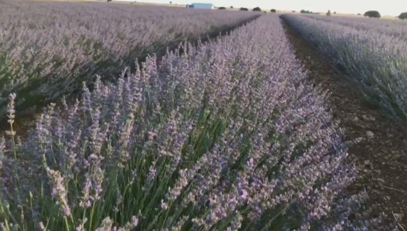 В испански земеделски район, където характерно се отглеждат зърнени култури,