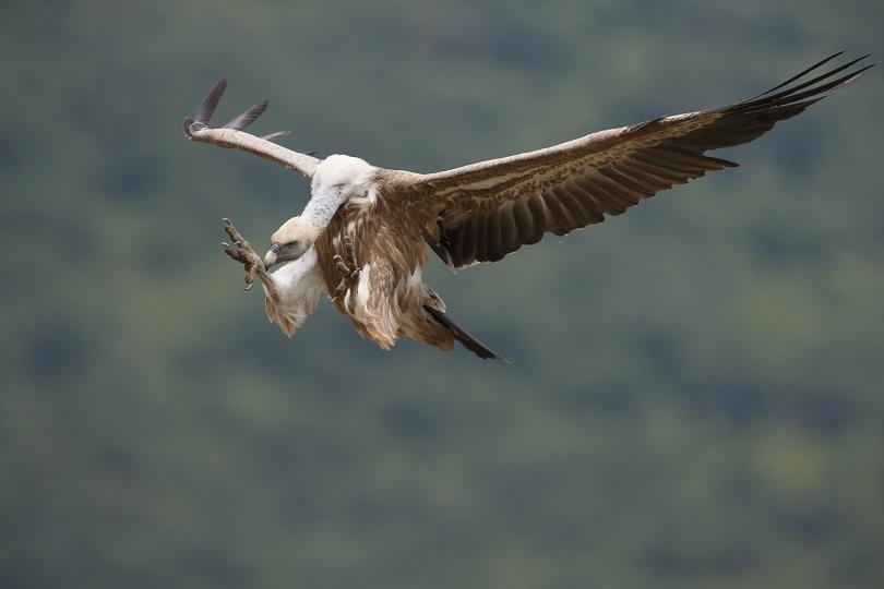 Един скален орел и пет белоглави лешояда са открити мъртви