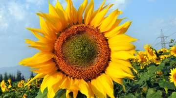 Лятото се връща - температурите се повишават и ще достигнат до 31 градуса