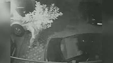 Откраднаха лимоново дърво от двора на кооперация в София