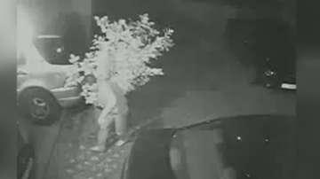 Върнаха лимоновото дърво, откраднато от двора на жилищна кооперация в София