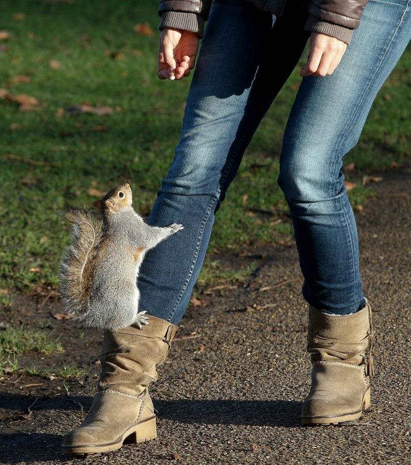 безстрашни животинки лондон