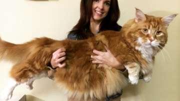 Вижте най-дългата котка в света
