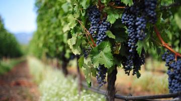 Празник на виното в с. Априлово, Старозагорско