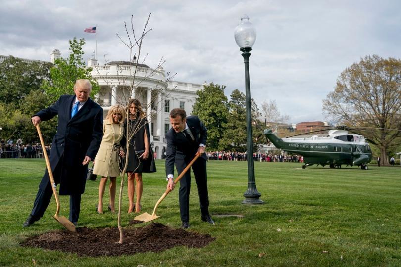 Във Вашингтон дъбовата фиданка, която френският президент донесе като подарък