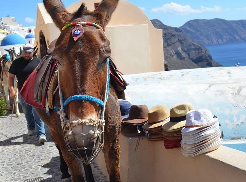 нов закон солени глоби защитават магаретата санторини