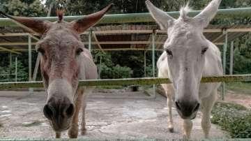 Испанци предлагат на Грета Тунберг да пътува от Лисабон до Мадрид с магаре
