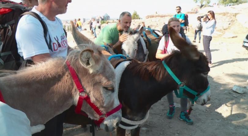 Снимка: Магарета изненадаха посетителите на Рахат тепе в Пловдив