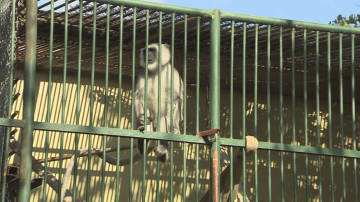 Кога ще можем да видим отново маймуните в столичния зоопарк?