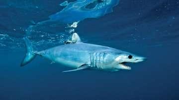 Топлите води около израелска ТЕЦ привлякоха десетки акули