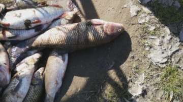 Масови проверки в Пловдив и региона за продажба на риба от река Марица