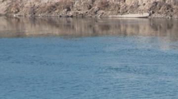 Първи резултати: Пестициди за растителна защита са отровили водата на Марица