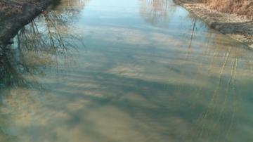 Все още не е ясно каква е отровата, попаднала в река Марица