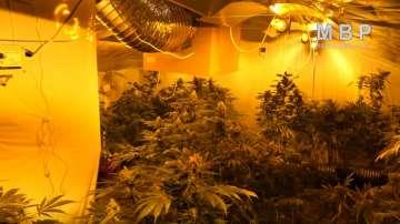 СДВР разкри модерна нарколаборатория за отглеждане на марихуана