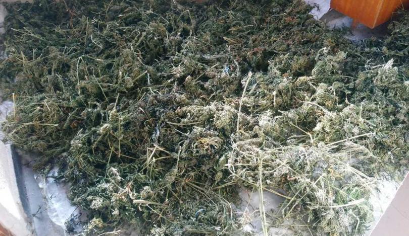 годишен мъж свищов задържан голямо количество марихуана