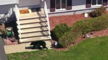 Неочакван посетител: Дива мечка се появи в американското градче Риджууд