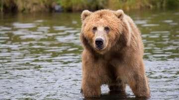 Двама младежи бяха нападнати от мечка в центъра на град в Румъния