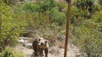 Заради кадри от пожара в с.Влахи разкриха нерегистрирани два вълка и една мечка
