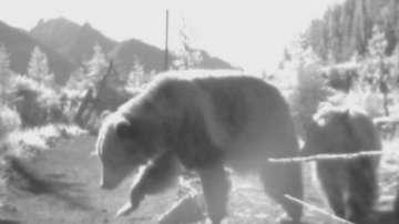 Зелена светлина: Решение за сблъсъците с диви животни по пътищата