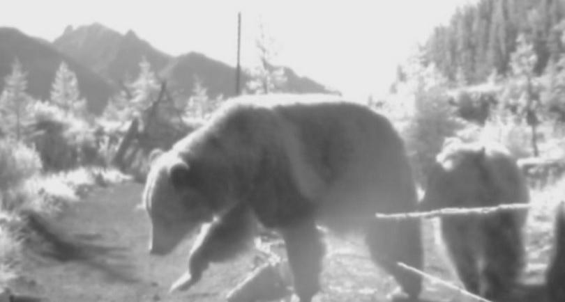 снимка 1 Зелена светлина: Решение за сблъсъците с диви животни по пътищата