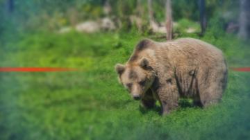 Разхлаждат обитателите на парка за мечки в Белица със специален сладолед