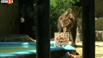 Как се разхлаждат мечките под жаркото бразилско слънце (ВИДЕО)