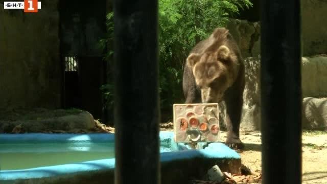 Снимка: Как се разхлаждат мечките под жаркото бразилско слънце