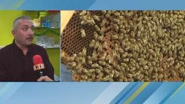 Заради ниски изкупни цени: Продукцията на пчеларите залежава в складове