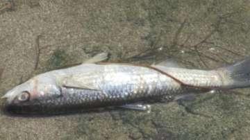 Извършват повторна проверка по сигнал за мъртва риба във водоем край Поморие