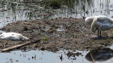 Птичи грип открит в Констанца на километри от България