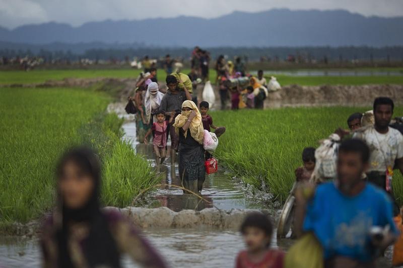 Представителите на рохинга преминават оризови полета, докато бягат към Бангладеш