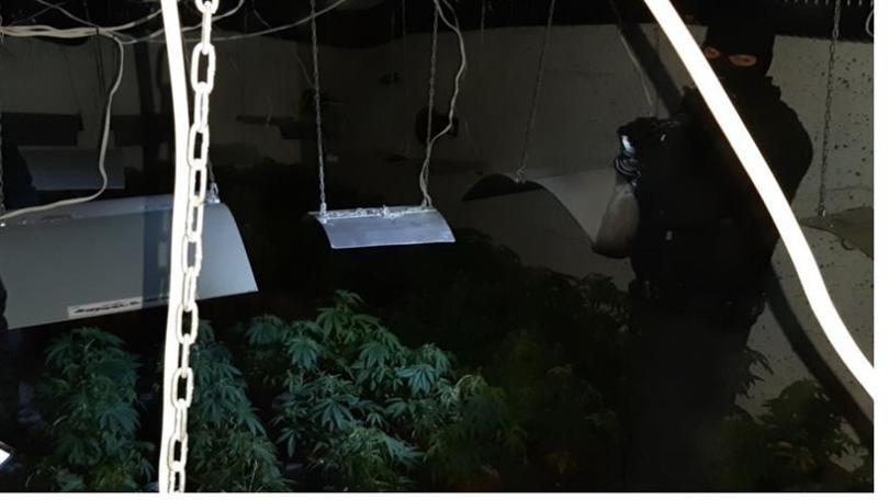 Високотехнологична, подземна наркооранжерия разкриха служители на ГДНП и жандармерията при