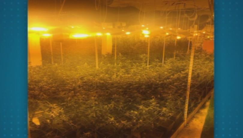 Полицаи разкриха наркооранжерия, оборудвана на най-високо технологично ниво, съобщават от