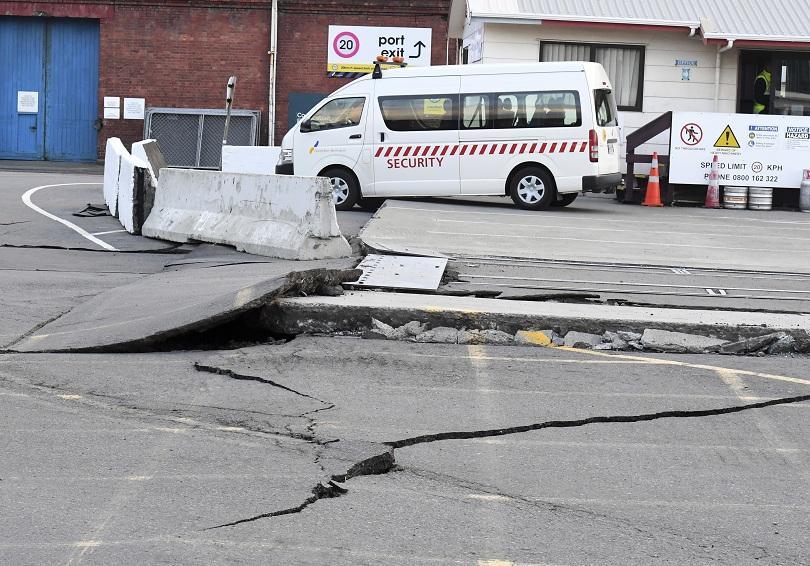 снимка 1 Три крави са блокирани на островче след земетресението в Нова Зеландия (ВИДЕО)