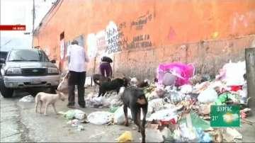 Икономическата криза във Венецуела засегна и домашните любимци