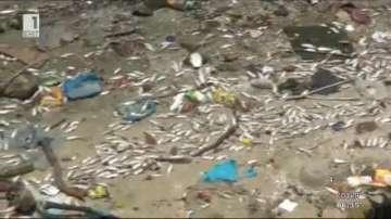 Хиляди мъртви риби в залив до Рио де Жанейро