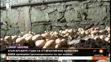 Българските гъби са с гарантирано качество