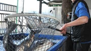 Преди Никулден: Проверки на търговците на риба в страната