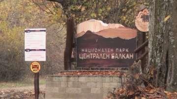 Двама младежи оцеляха след среща с вълци в планината