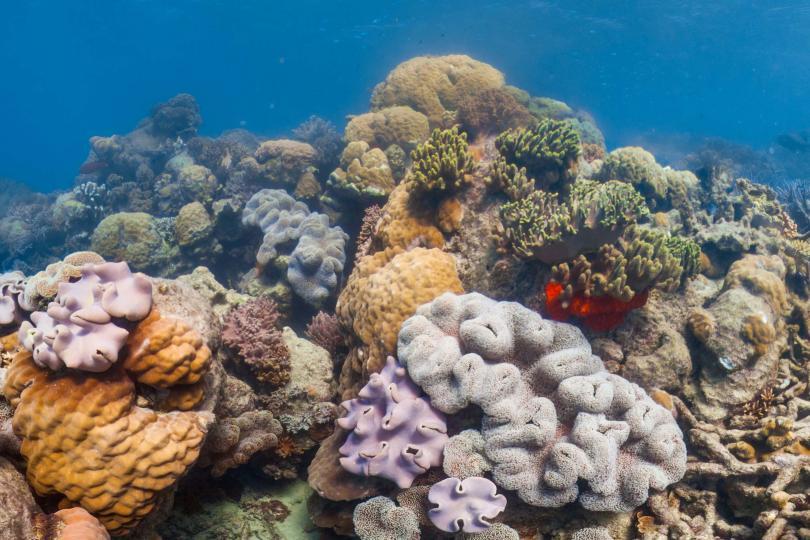 Необичайно ниските температури на водата са довели до измиране на