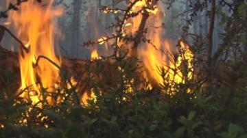 Огромни горски пожари продължават да бушуват в Якутия