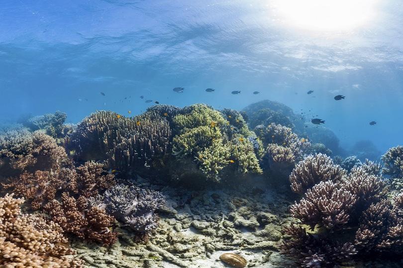 Учени от Лондонския университетски колеж установиха, че морското течение Гълфстрийм