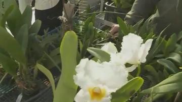 Във Варна отвори врати първата оранжерия за колекционерски орхидеи на Балканите