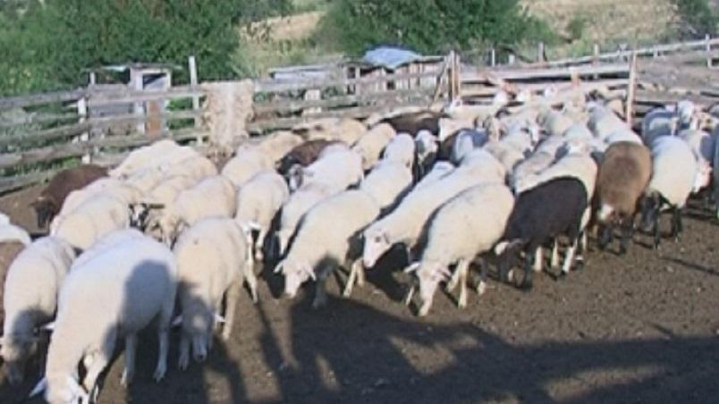 Собствениците на умъртвени животни в първото село, в което беше