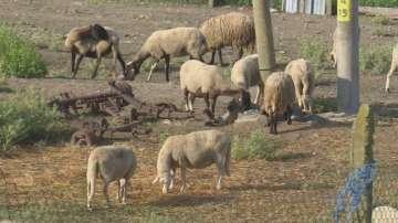 Напрежението в Болярово остава, още не са взети втори проби от животните